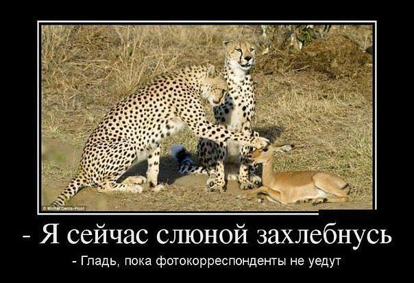 http://cs607631.vk.me/v607631793/19e1/lJpBIklLYWk.jpg