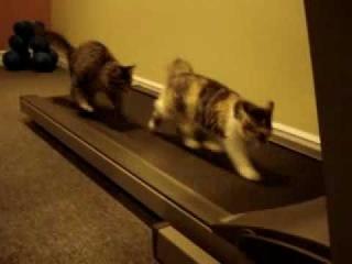 Тренировка котов на беговой дорожке!!!!