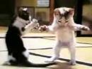Pisici care danseaza ditesti