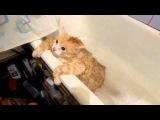 Котик в ванной! Вот жирдяй)