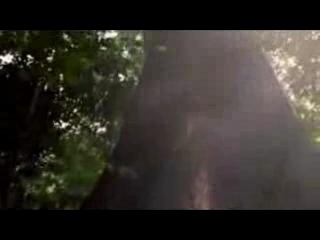 Майкл Джексон - Песня Земли (Earth Song), видео-клип