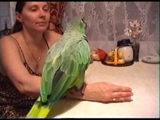 Попугай Гриша поёт песню : Какао - какао ко ко ко .