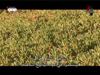 Al Ain city United Arab Emirates Documentary full movie