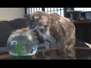 Кошка и рыба - внезапно!