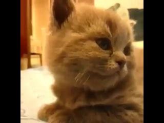 azamat_turehan video