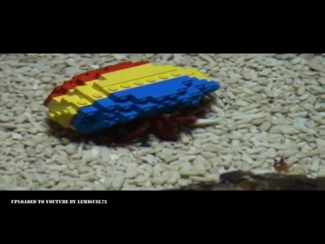 Un cangrejo ermitaño adopta una concha hecha de bloques Lego
