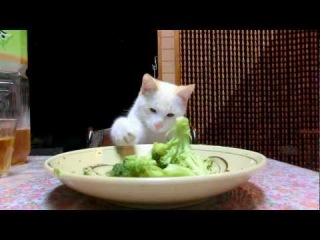 world of the cat 猫の世界 ( Nyan Cat kittes)