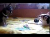 Жадный КОТ отжал игрушку у щенка !