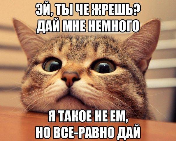 http://cs607731.vk.me/v607731952/3706/TDmObJIjPQ0.jpg
