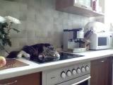 Кот, котик, кот разговаривает, мило, смешно, до слез, прикол, умиление :)
