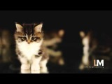 Cloud feat Yoanna - thinking of you (FRW Lounge Master 2012) HQ video