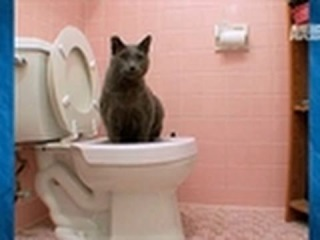 Toilet training older cats