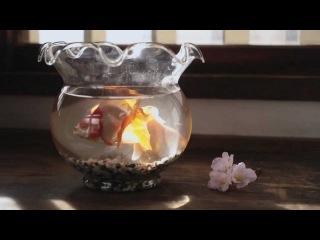 Peaberry - Cabbage Hakusho ~Haru-Hen~