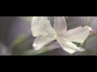 Фильм: J'adore DIOR le Parfum