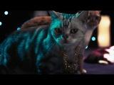 R&B Кот - Реклама Litter Genie - Очиститель кошачьего туалета [advertmusic.ru]