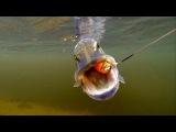 Рыбалка: весенняя щука на силикон.