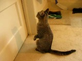 Luna the Cat wants to go outside.  Cute and Funny!!!