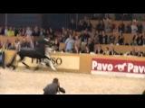 Beart 411 Sport (Leeuwarden 2012)