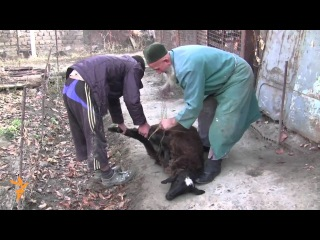 Tajiks Celebrate Eid al-Adha (Radio ozodi  Free Europe/Radio ozodi)