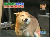 Собака Улыбака. Very funny dog! 非常に面白い犬