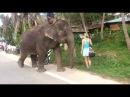Панганский слон