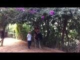Вьетнам_2014_Ксюша на страусе