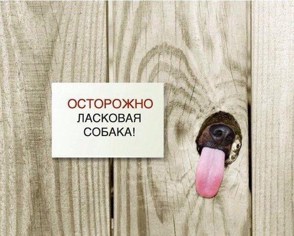 Фото приколы на ха-ха: