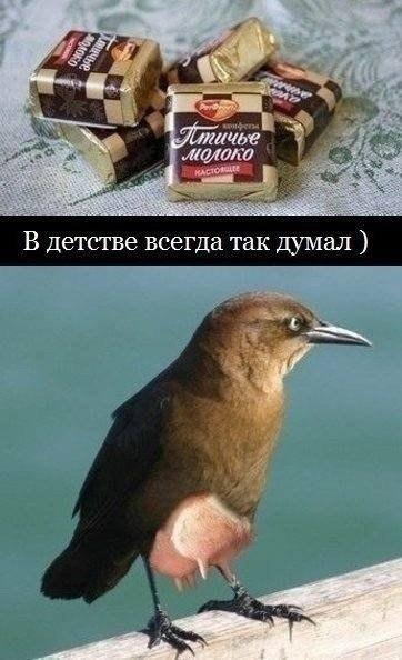 http://cs607930.vk.me/v607930717/338b/_liRquXWtEE.jpg