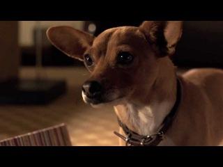Крошка из Беверли-Хиллз 3 / Beverly Hills Chihuahua 3: Viva La Fiesta! (2012) Трейлер