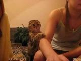 поглать кота, ну погладь...)
