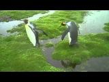 Pingwiny mają problem :)