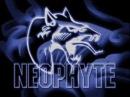 Neophyte - recht uit de ondergrond