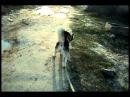 Хаски. CayZer - Гуляем, метим и какаем (Siberian Husky)