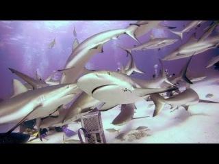 GoPro : Короткий фильм про акул
