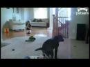 Собака села на лицо ребенку