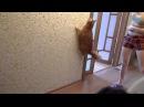 Зацените прыгучесть кота