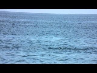 Август 2012 Крым Рыбачье море пляж жара дельфины турист +