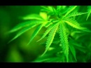 Ewex ft. Beeta - Zole - ne narkotikai