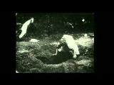 Apollonia's Kiss - Alice
