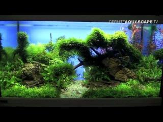Aquascaping - The Art of the Planted Aquarium 2013 XL, pt.3