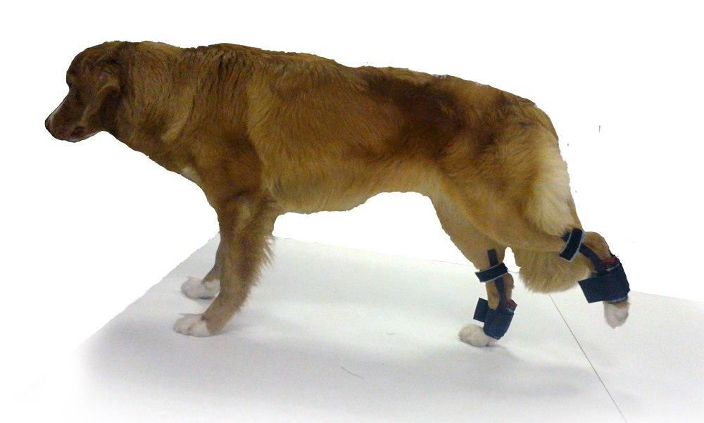 Форум ветеринарной клиники Белый Клык - Просмотр профиля: Михаил Карелин