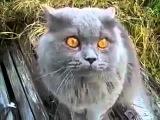 Кот говорит гад mp4