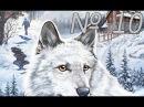 Нэнси Дрю: Белый Волк Ледяного Ущелья. Часть 10.