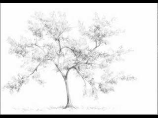 учимся рисовать дерево Draw_the_correct (Рисунки, как правильно нарисовать)