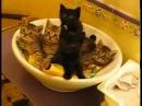 Синхронные котята  synchronous cats