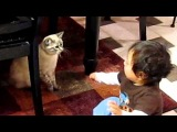 the cutest video ever....baby cat fight