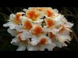 Lluvia de Primavera . . . Bebu Silvetti (HD)