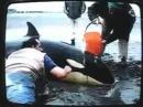 Человек и дельфины         .
