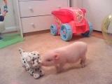 Micro Mini Piglet *Clyde*
