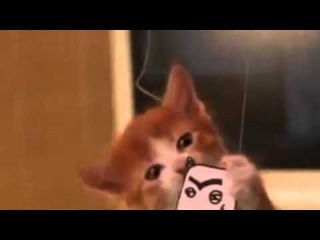 Новогодний прикол - Антивирусный котик